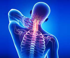 Orthopaedics Applications Spinal Cord in Human Body